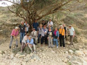 sous l'arbre à encens dans les montagne du Dhofar